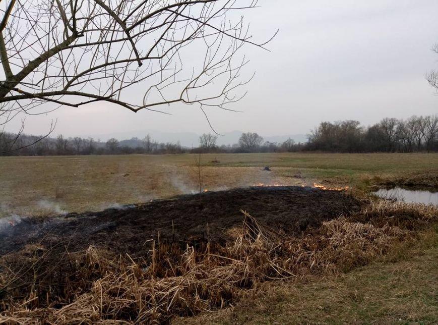 Долина нарцисів потерпає від пожеж: фото, фото-3