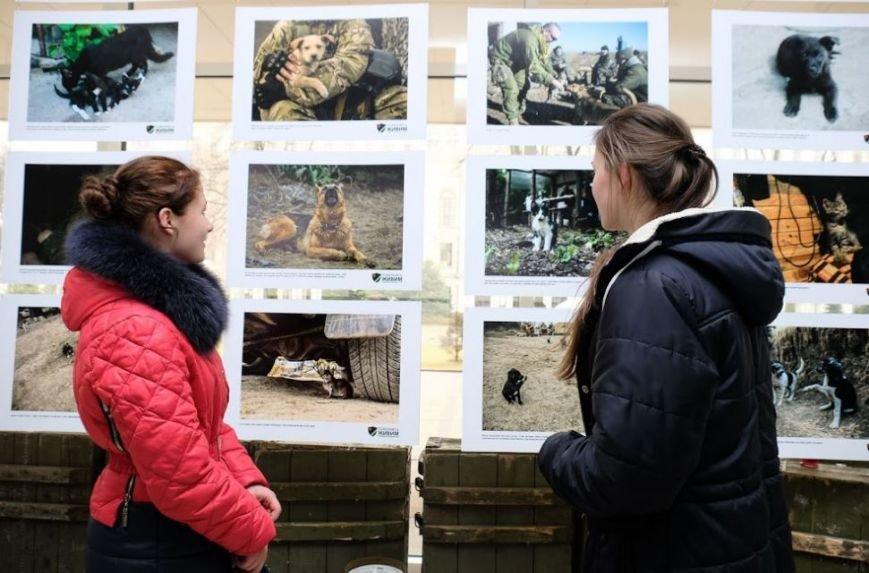 Животные на войне: в Днепре представили фотопроект о жизни четырехлапых в зоне АТО (ФОТО), фото-3
