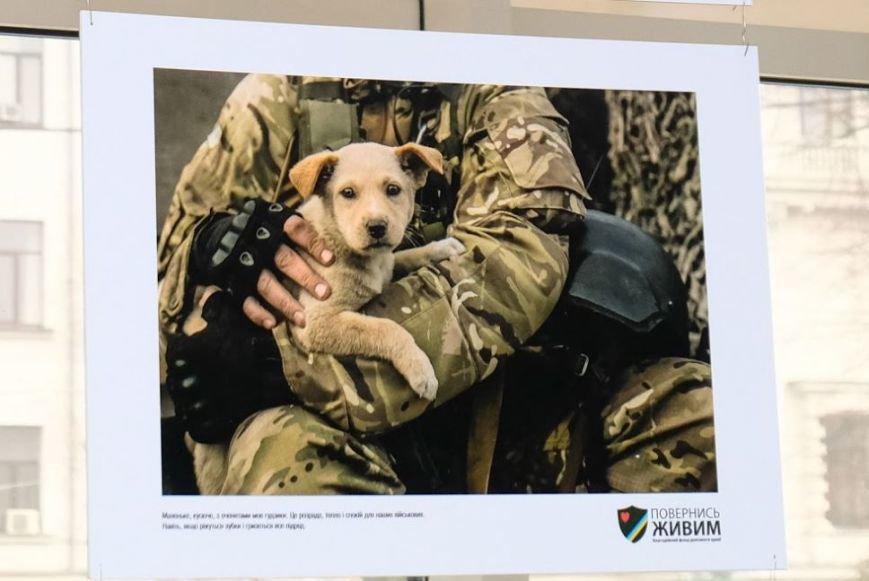 Животные на войне: в Днепре представили фотопроект о жизни четырехлапых в зоне АТО (ФОТО), фото-1