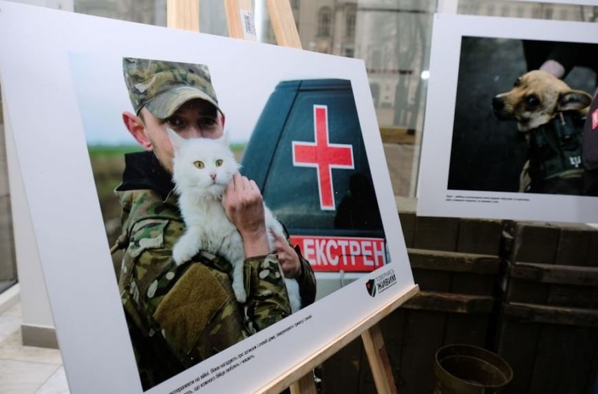 Животные на войне: в Днепре представили фотопроект о жизни четырехлапых в зоне АТО (ФОТО), фото-5