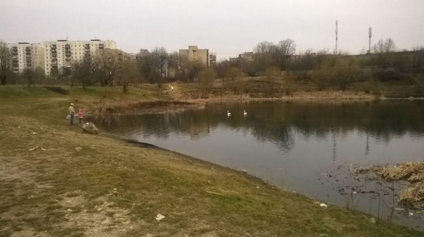 """В Ужгороді на """"Кірпічці"""" оселився ще один лебідь і фазан: фото, фото-4"""