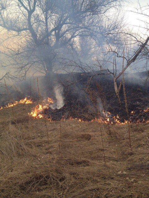 Как кременчугские пожарные в Крюкове сухую траву тушили (ФОТО), фото-1