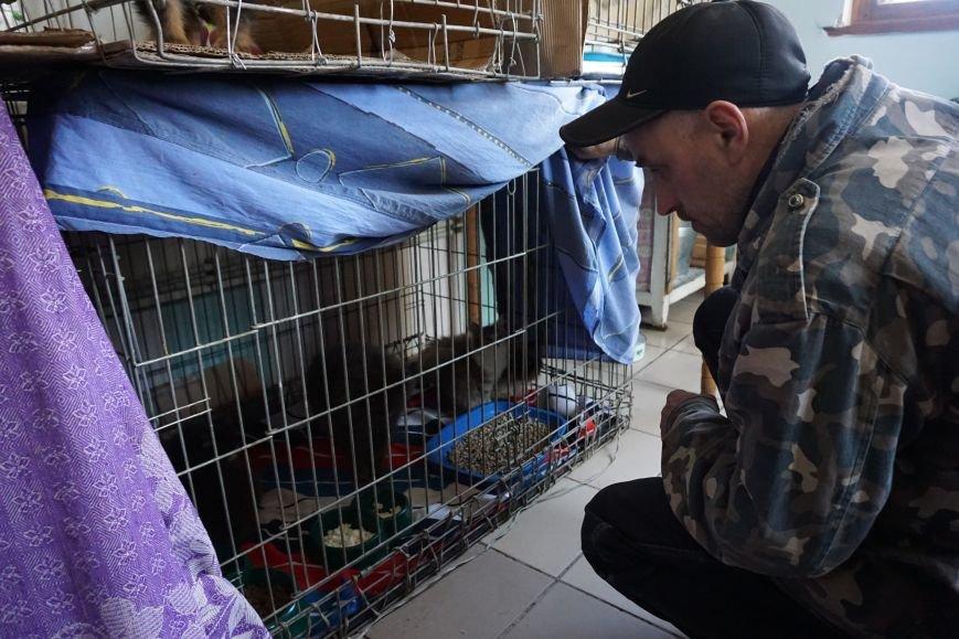 Власти Каменского хотят потратить 100 млн на собачьи будки, фото-5