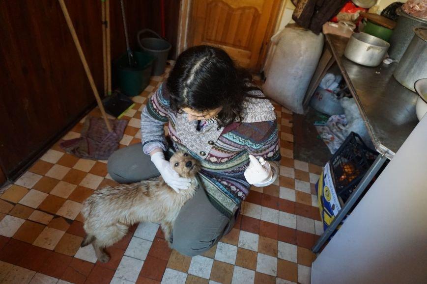 Власти Каменского хотят потратить 100 млн на собачьи будки, фото-4