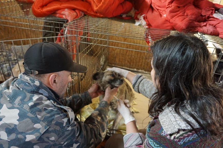 Власти Каменского хотят потратить 100 млн на собачьи будки, фото-3