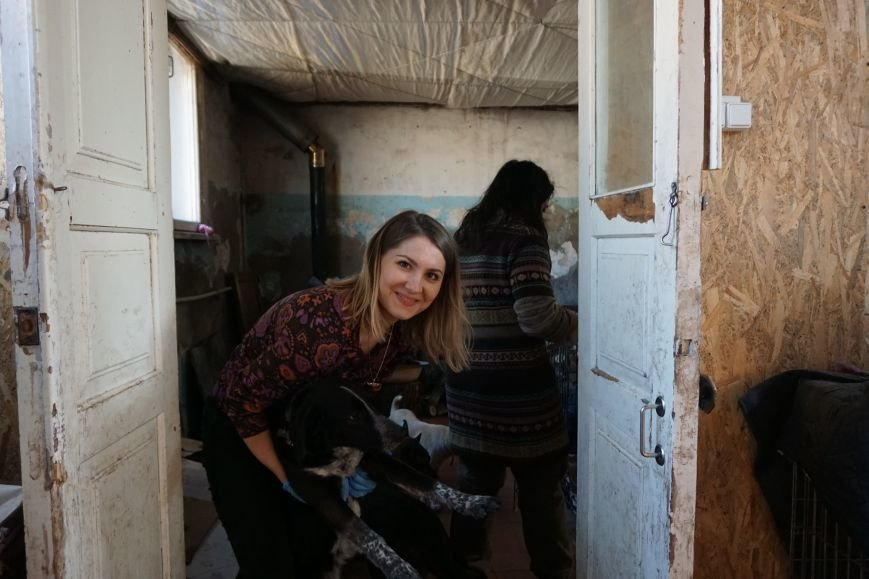 Власти Каменского хотят потратить 100 млн на собачьи будки, фото-2