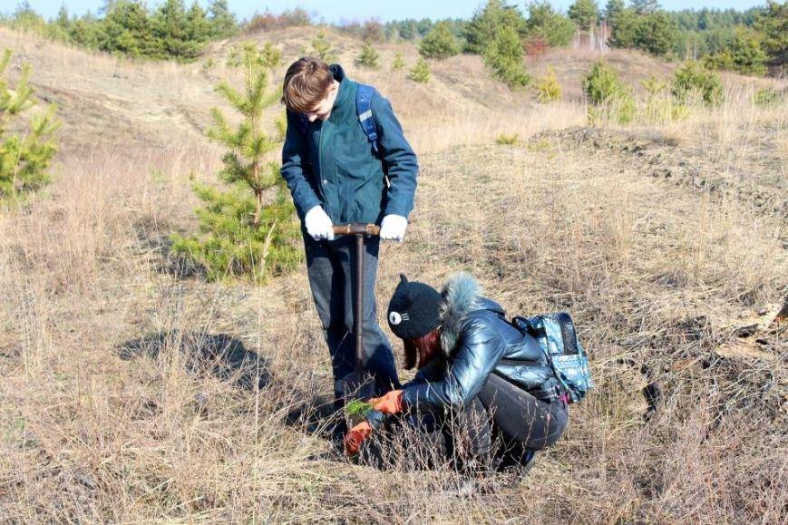 Кременчугские школьники посадили хвойный лес под Кременчугом (ФОТО), фото-5