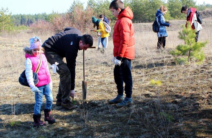 Кременчугские школьники посадили хвойный лес под Кременчугом (ФОТО), фото-2