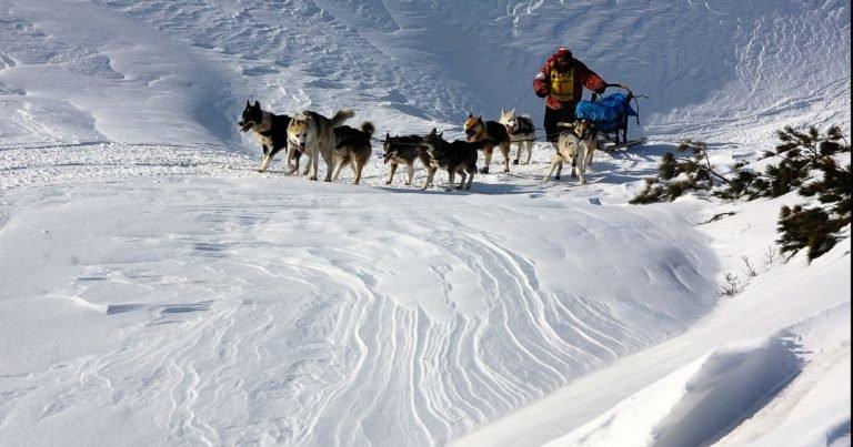 Каюры «Берингии» пургуют у подножья Карагинского перевала, фото-1