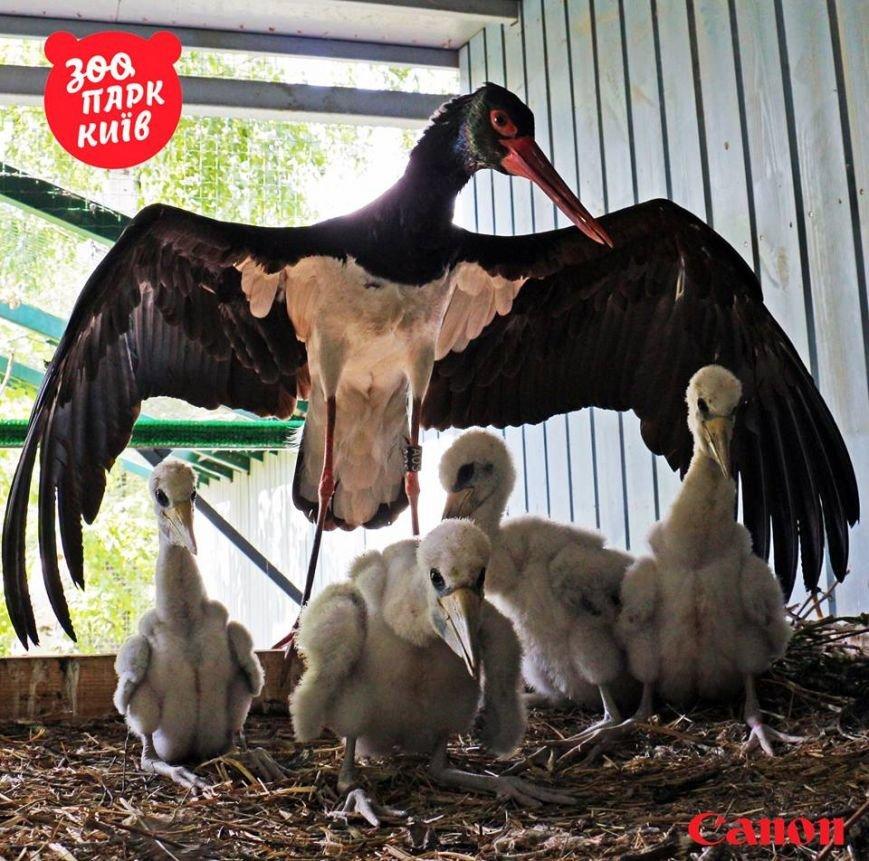 В Киевском зоопарке вывели птенцов исчезающего вида (ФОТО), фото-1