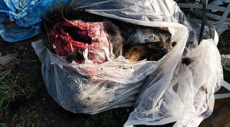У Хусті на узбіччі виявили тіло розчленованої собаки: фото, фото-1