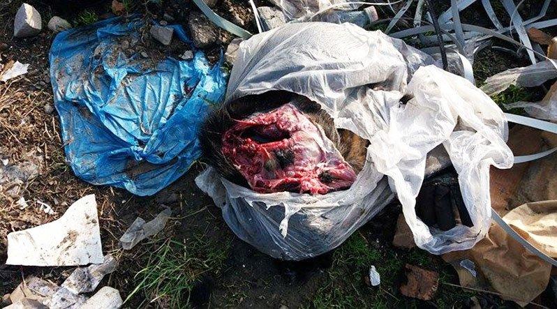 У Хусті на узбіччі виявили тіло розчленованої собаки: фото, фото-2