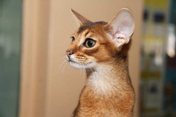 кошки9 - копия