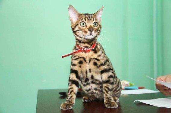 кошки15 - копия