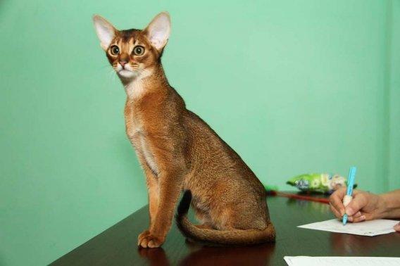 кошки16 - копия
