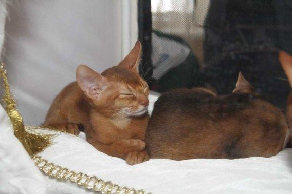 кошки3 - копия