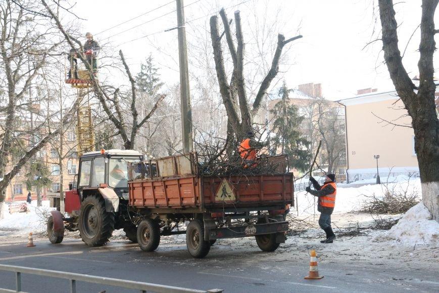 Зачем так с каштанами в Чернигове?!, фото-6