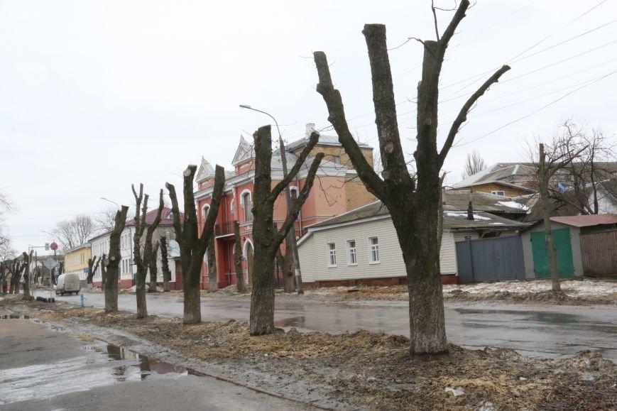 Зачем так с каштанами в Чернигове?!, фото-1
