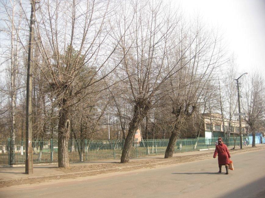 Зачем так с каштанами в Чернигове?!, фото-4
