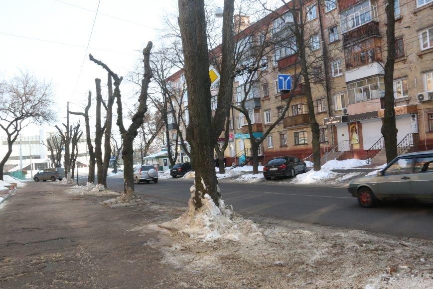 Зачем так с каштанами в Чернигове?!, фото-5