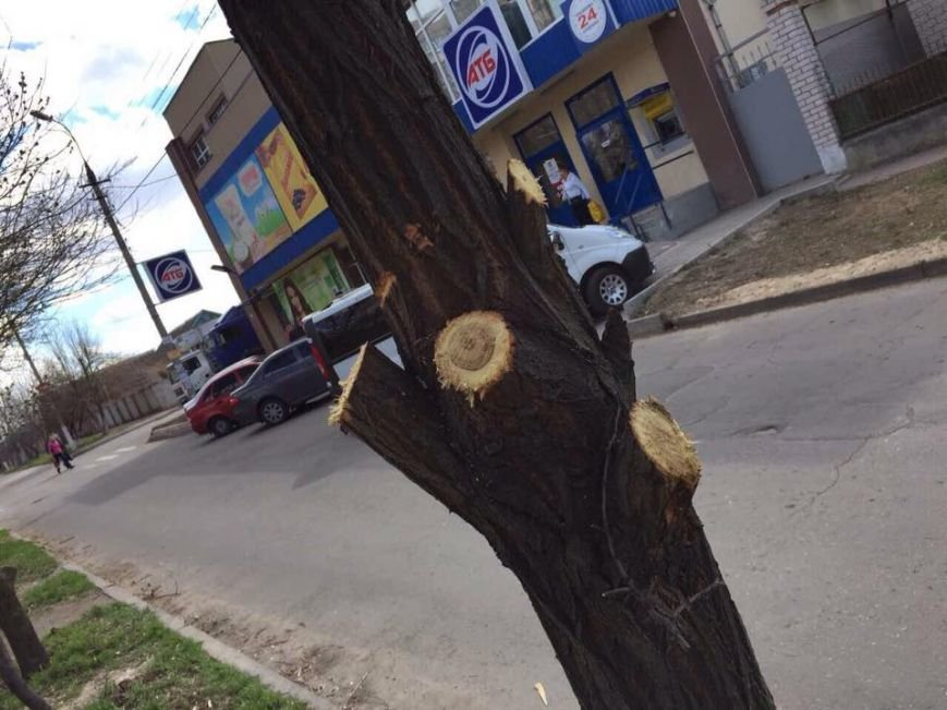 У Херсоні знову несанкціонована обрізка дерев (фото), фото-5