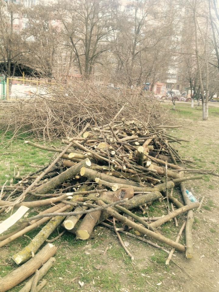 У Херсоні знову несанкціонована обрізка дерев (фото), фото-4