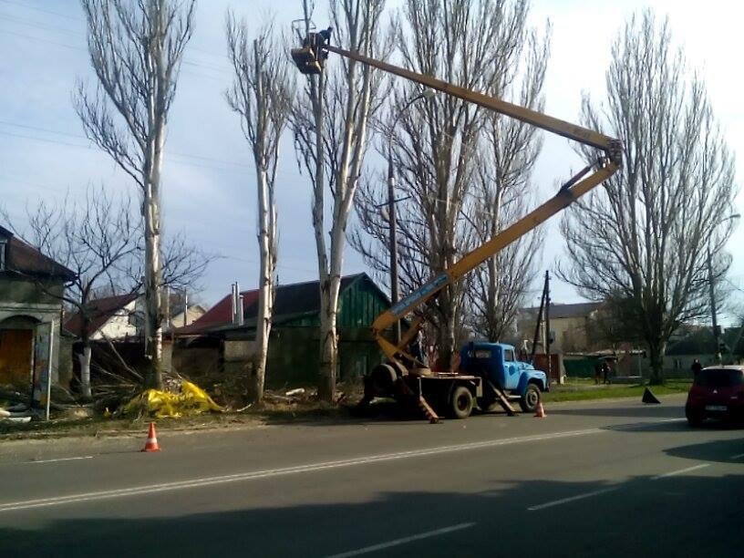 У Херсоні знову несанкціонована обрізка дерев (фото), фото-2