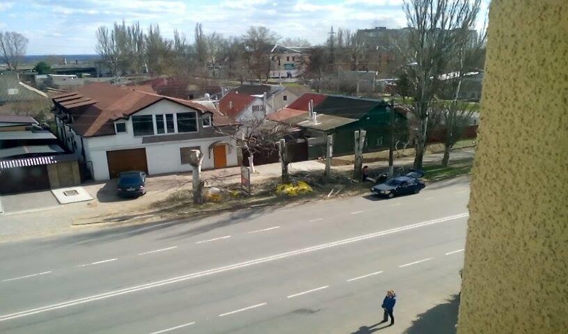 У Херсоні знову несанкціонована обрізка дерев (фото), фото-1