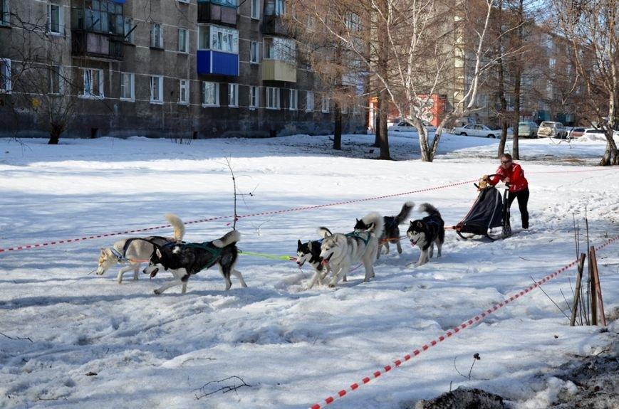 На Камчатке победителем «Елизовского спринта-2017» стал Никита Ревенок, фото-9