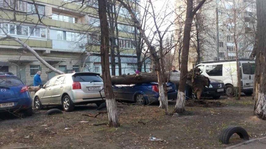 На Русановке дерево разбило несколько машин (ФОТОФАКТ), фото-1