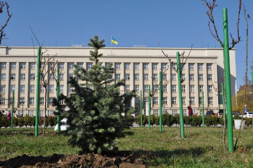 В Ужгороді у розпалі весни посадили новорічну ялинку: фото, фото-1