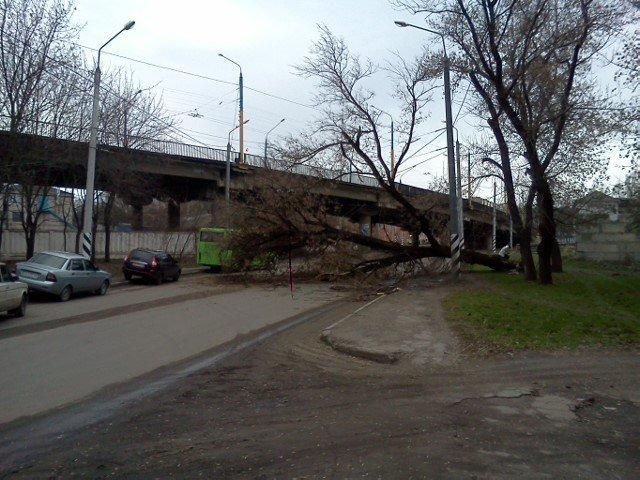 Упавшее дерево в Краматорске стало причиной огромной пробки, фото-1