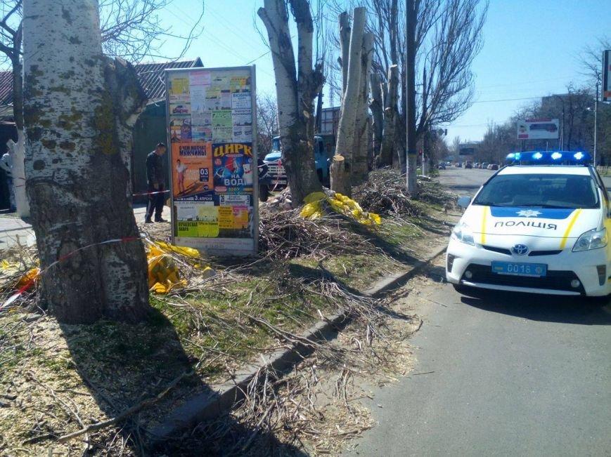 Херсонский депутат вызвал полицию, увидев неизвестного, пилящего деревья у типографии (фото), фото-1