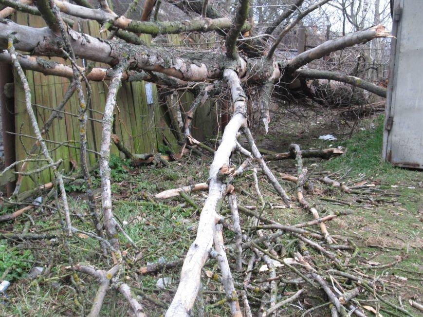 Шквальний вітер у Новограді-Волинському поламав дерева (ФОТО), фото-6