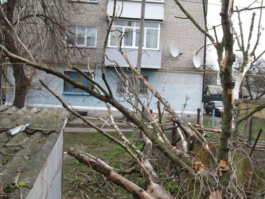 Шквальний вітер у Новограді-Волинському поламав дерева (ФОТО), фото-5