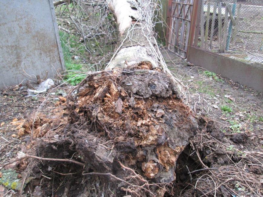 Шквальний вітер у Новограді-Волинському поламав дерева (ФОТО), фото-3