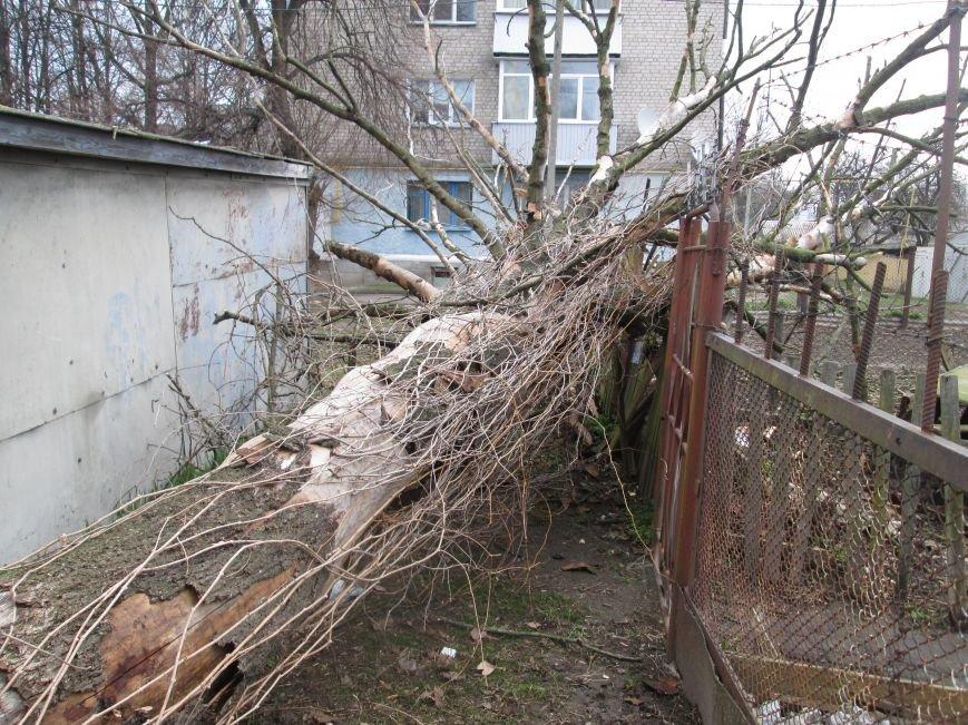 Шквальний вітер у Новограді-Волинському поламав дерева (ФОТО), фото-4