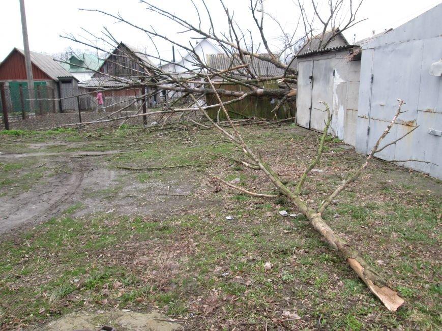Шквальний вітер у Новограді-Волинському поламав дерева (ФОТО), фото-2