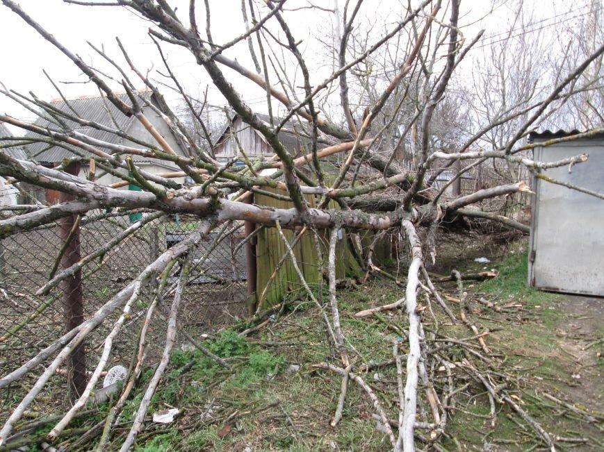 Шквальний вітер у Новограді-Волинському поламав дерева (ФОТО), фото-1