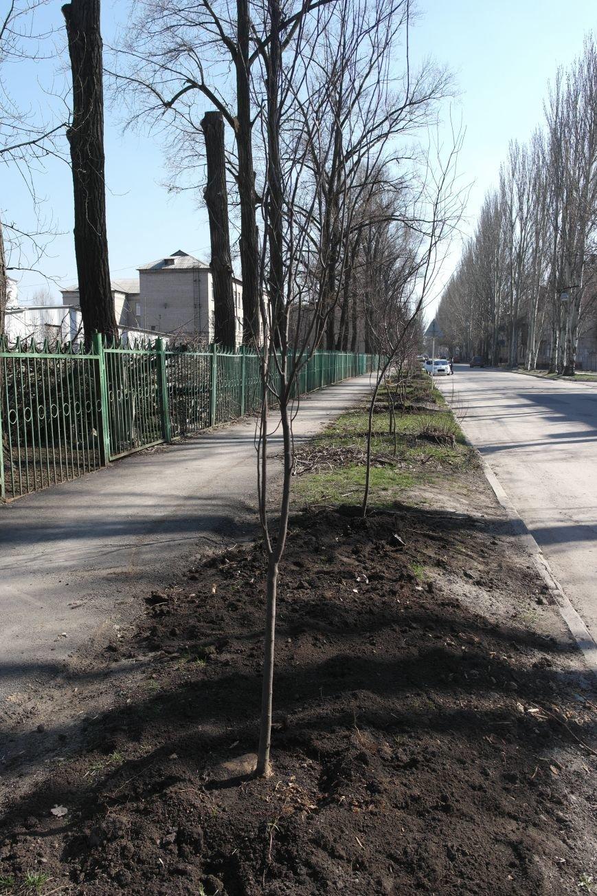 В Покровске высадили декоративные сливы, фото-1