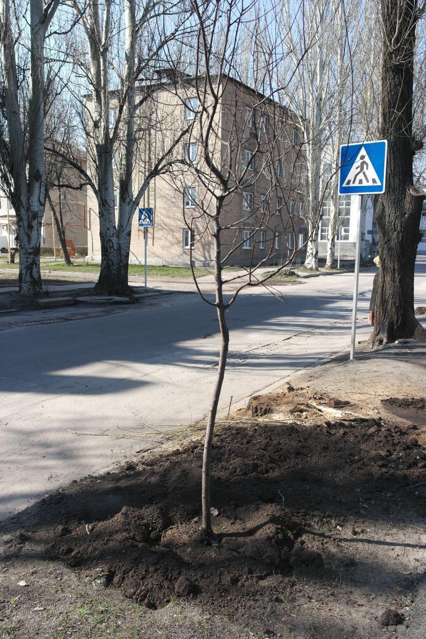 В Покровске высадили декоративные сливы, фото-2