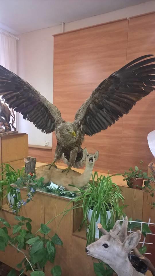 Выставка «Крылья, лапы, хвосты», фото-4