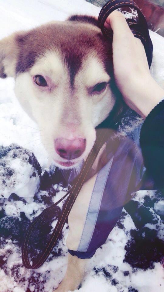 Возьми себе друга: молодой и добродушный пес Ронни ищет любящую семью, фото-3