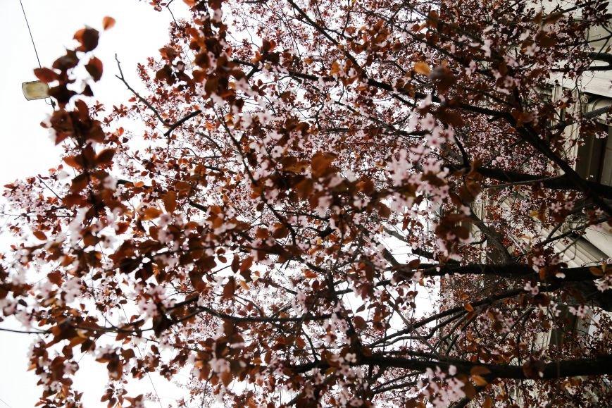 Симферополь начал оживать: распустились почки, зацвели плодовые деревья (ФОТО), фото-11