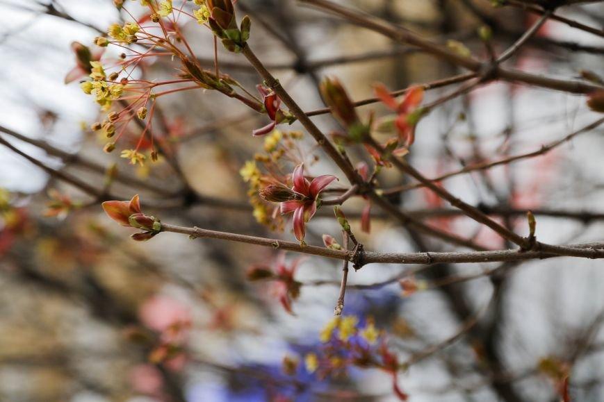 Симферополь начал оживать: распустились почки, зацвели плодовые деревья (ФОТО), фото-1