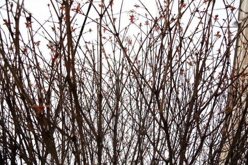 Симферополь начал оживать: распустились почки, зацвели плодовые деревья (ФОТО), фото-4