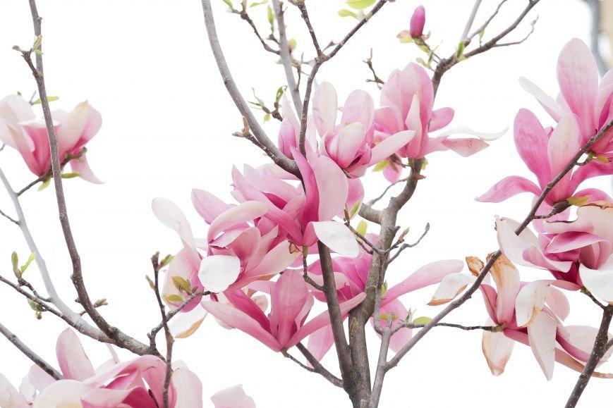 Симферополь начал оживать: распустились почки, зацвели плодовые деревья (ФОТО), фото-6