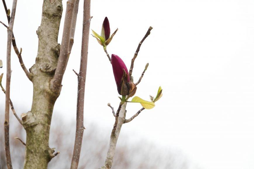 Симферополь начал оживать: распустились почки, зацвели плодовые деревья (ФОТО), фото-5
