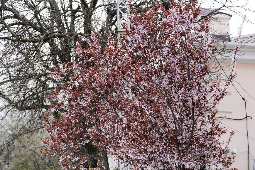 Симферополь начал оживать: распустились почки, зацвели плодовые деревья (ФОТО), фото-12