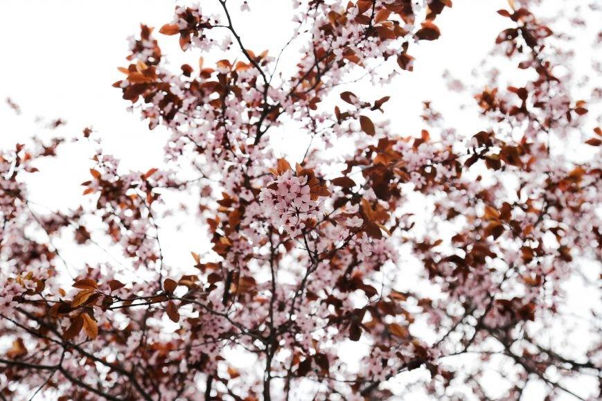 Симферополь начал оживать: распустились почки, зацвели плодовые деревья (ФОТО), фото-9